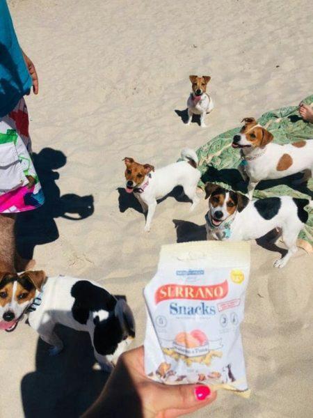 Jack Russell Terrier oraz Serrano Snack