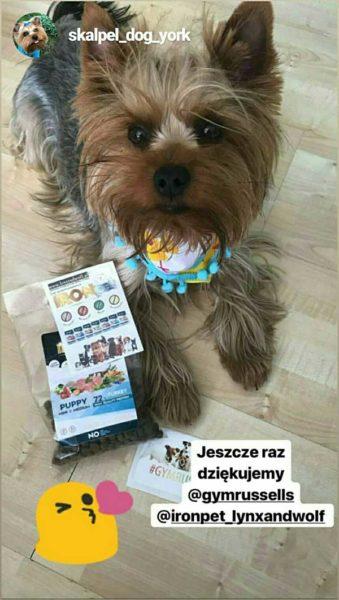 psy z produktami lynxandwolf.pl