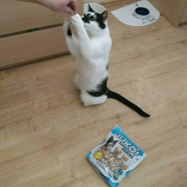 Smaczki JUKO dla kota w lynxandwolf