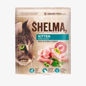 shelma-kitten-turkey