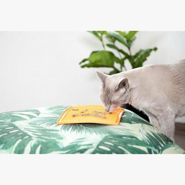 lick-mata-dla-kota