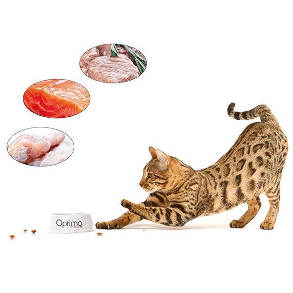 OPTIMAnova Cat Adult Kurczak i Ryż dla kota 2 kg